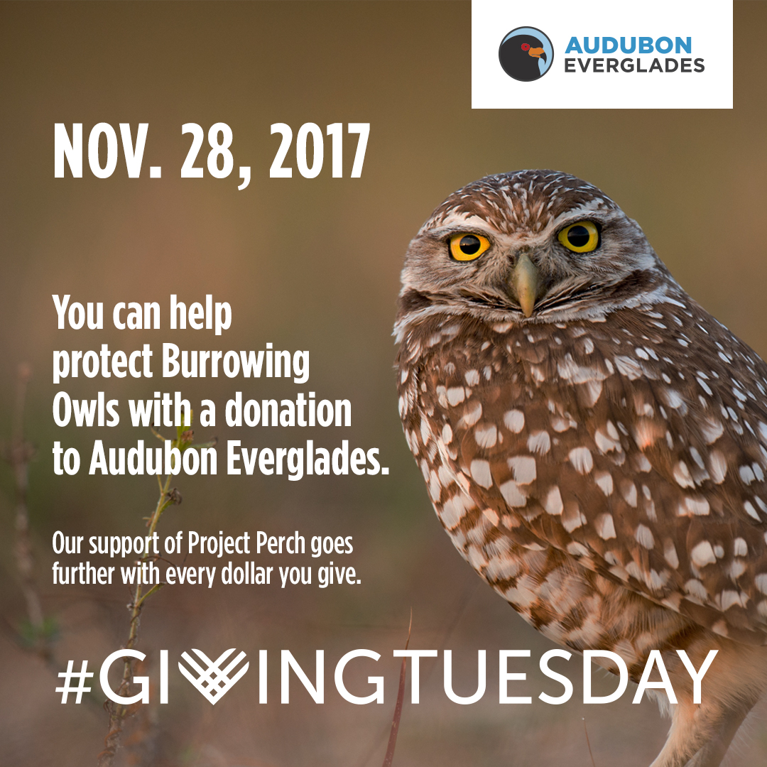 Giving Tuesday - The Burrowing Owls