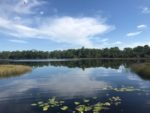 Gator Lake at Grassy Waters Everglades Preserve